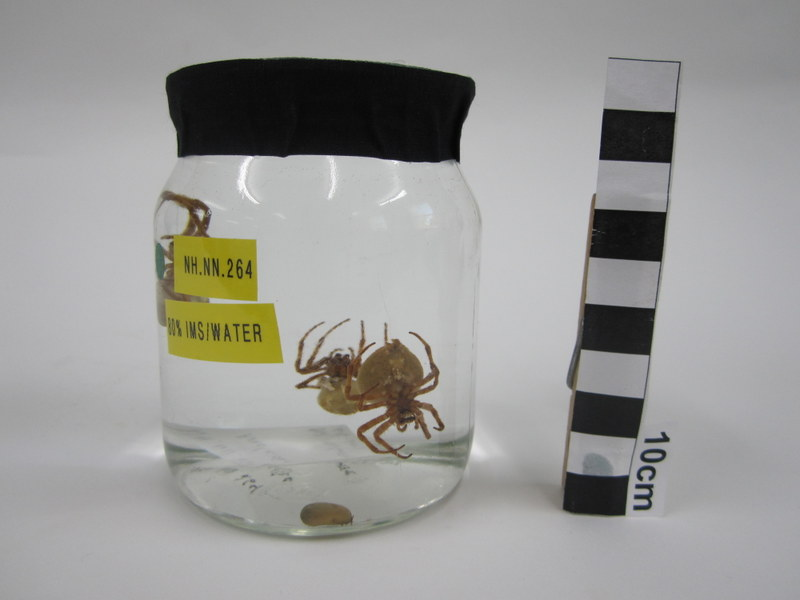 Edderkoppene montert i et mer passende glass