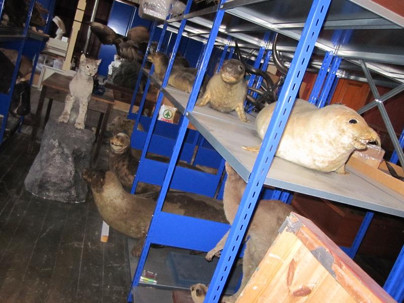 Hyllevis med dyr i Tårnsalen