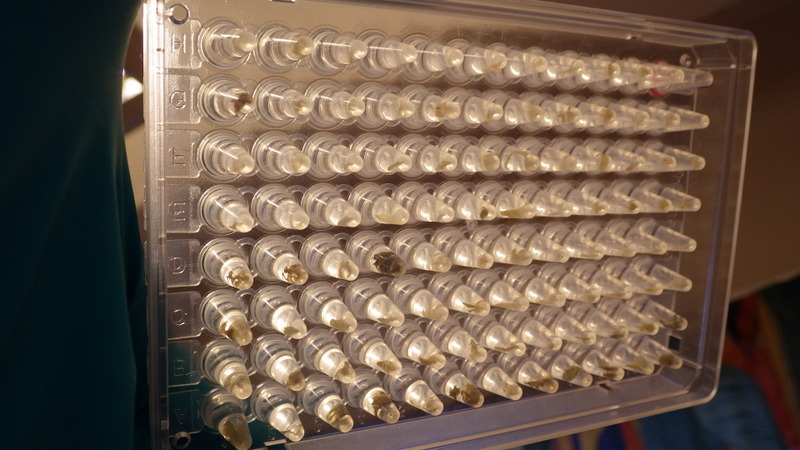 En ferdig fylt plate med vevsprøver av 95 dyr