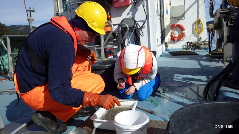 Plukke, plukke - ved å sortere litt ombord får vi en ide om hvilke dyregrupper vi har fått med oss
