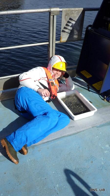 Og (om vær og vind tillater det) så grovsorterer vi litt på dekk - i går var det som sagt veldig, veldig fint å være marinbiolog!