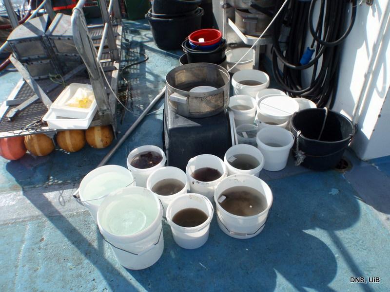 Totalen ble 15  bøtter i fra seks stasjoner i Lysefjorden (Hordaland) - så nå er det full rulle på laben med sortering og fotografering!