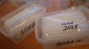 Seks plater med vevsprøver klare til innsending