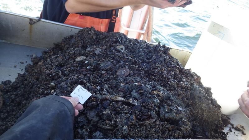 De klassiske haugene av havbunn - finner vi dyrene våre her?