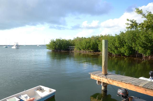 Mangroveskog med sjøgressenger (Key Largo)