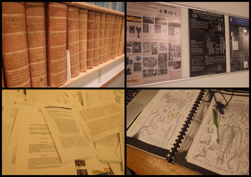 Vitenskapelige publikasjoner spenner vidt; i fra skinninbundne verk til postere, presentasjoner, artikler i tidsskrift til taksonomiske nøkler