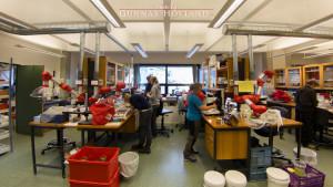 Gjennomgang av fangsten på laben