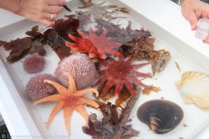 Assortert utvalg plukk i fra dykkerne
