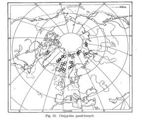 Utbredelse av Cleippides quadricuspis. Figur fra Stephensen, 1933