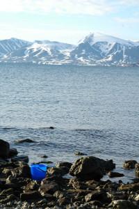 Også steinfjærer på Svalbard har mange amfipoder. Foto: AHS Tandberg