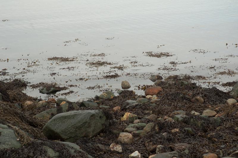 Et perfekt sted å lete etter amfipoder! Foto: AHS Tandberg