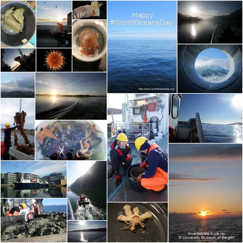Glade forsker på felt i regn og sol, vind og stille :) (fotos: K.Kongshavn)