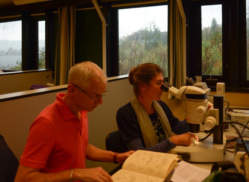 Olli og Anne-Nina i konsentrert jobbing