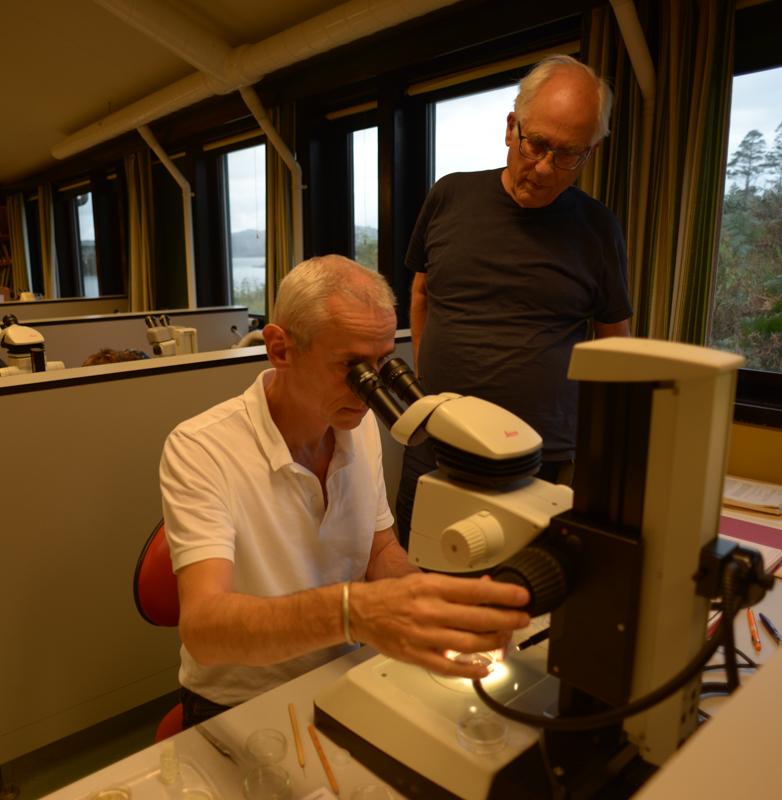 Wim og Olli diskuterer en amfipode