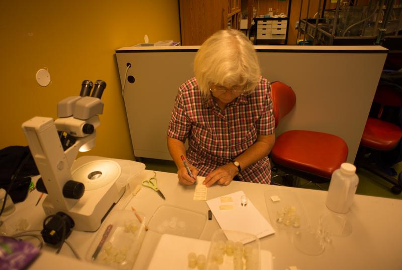 Traudl skriver stasjonslapper - det er viktig å vite hvor artene er funnet