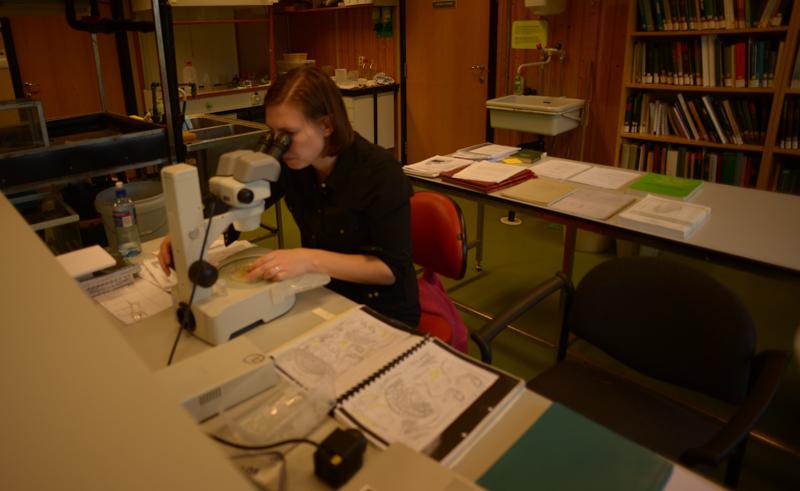 Marijana konsentrert over Harpinia
