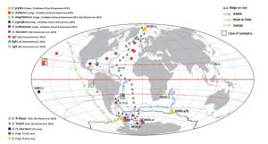 Geografisk utbredelse av de forskjellige artene innen slekten Eurythenes. Fig 3 fra Havermans 2016.