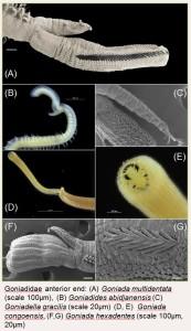 Bilder av noen av de morfologiske karakterene vi undersøker når vi artsbestemmer dyrene