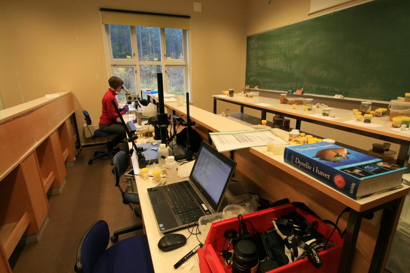 NorBOL-benken: Fotografering og vevsprøvetaking på samlebånd