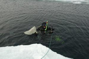 En dykker er klar til å samle inn Gammarus wilkitzkii under havisen nord for Svalbard. Foto: AHS Tandberg