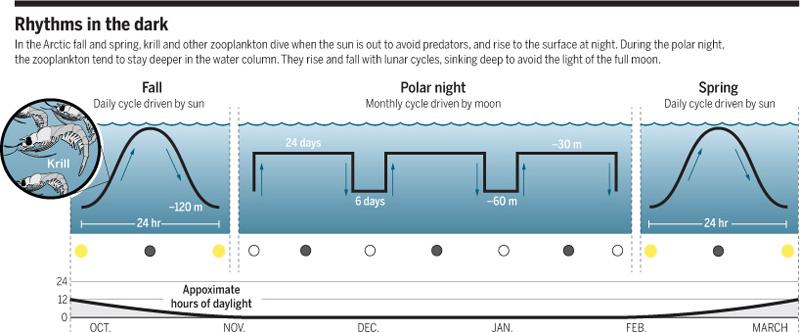 Forskjellen på zooplankton migrasjonen om høsten (solstyrt), om vinteren (månestyrt) og om våren (solstyrt). Figur 3 fra Kintisch 2016