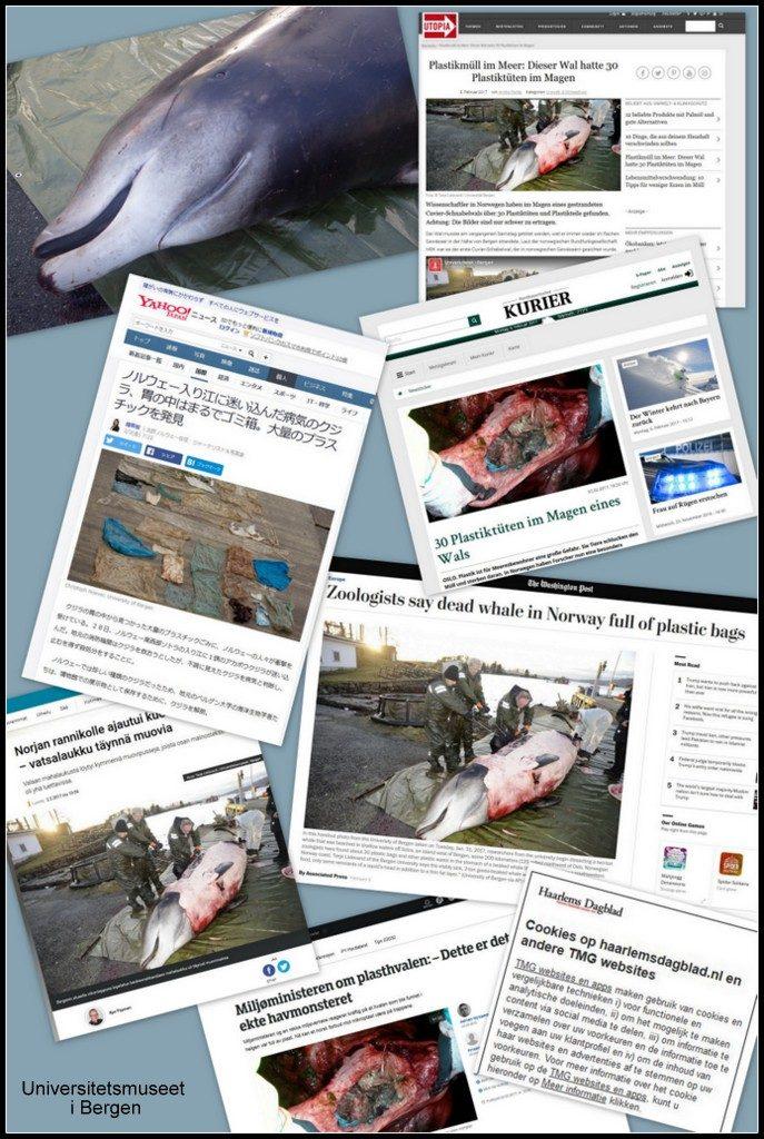 Plastfunnet i hvalen har ført til mange avisoppslag om marin forsøpling