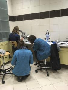 Lauren, Anne-Nina og Tammy prøver å finne ut av en vanskelig amfipode. Foto: AH Tandberg