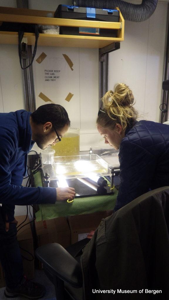 Luis og Marie undersøker en planktonprøve