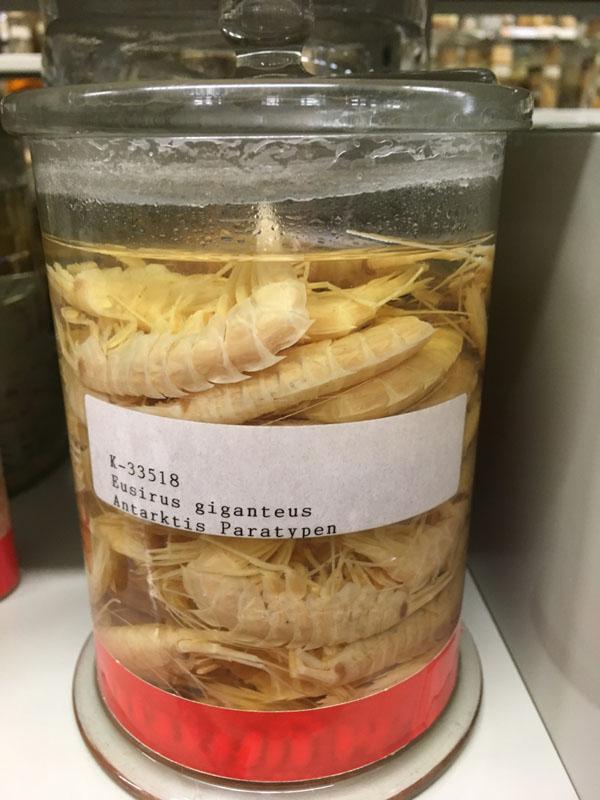 Store er de, men smaker de noe godt? Vi har ikke testet. Foto: AH Tandberg