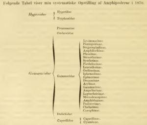 Boeck sitt forslag til ordning av amfipodene Ill: Boeck, 1872
