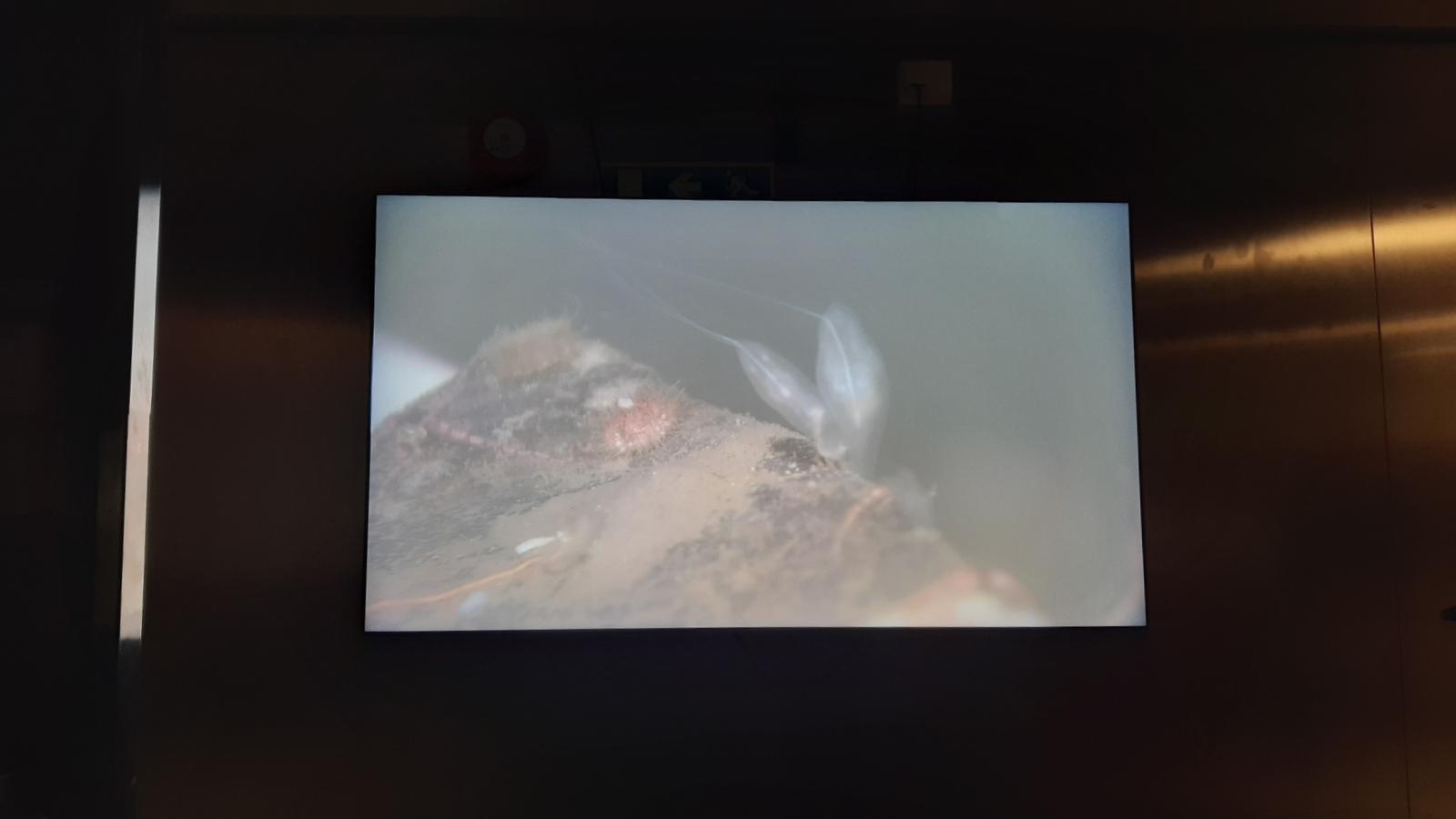 Noen bilder jeg knipset med mobilen underveis i filmingen - stort sett var det for mye å skrive til å slippe tastaturet..