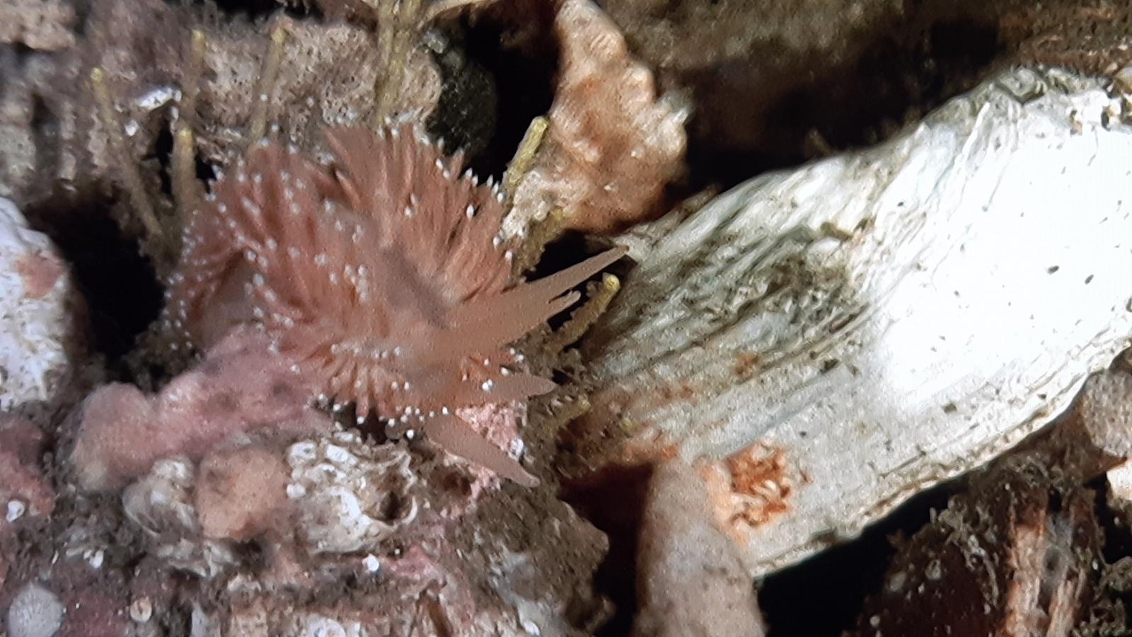 Nok en nakensnegl, her må de som kan dem inn og si hva den heter :)