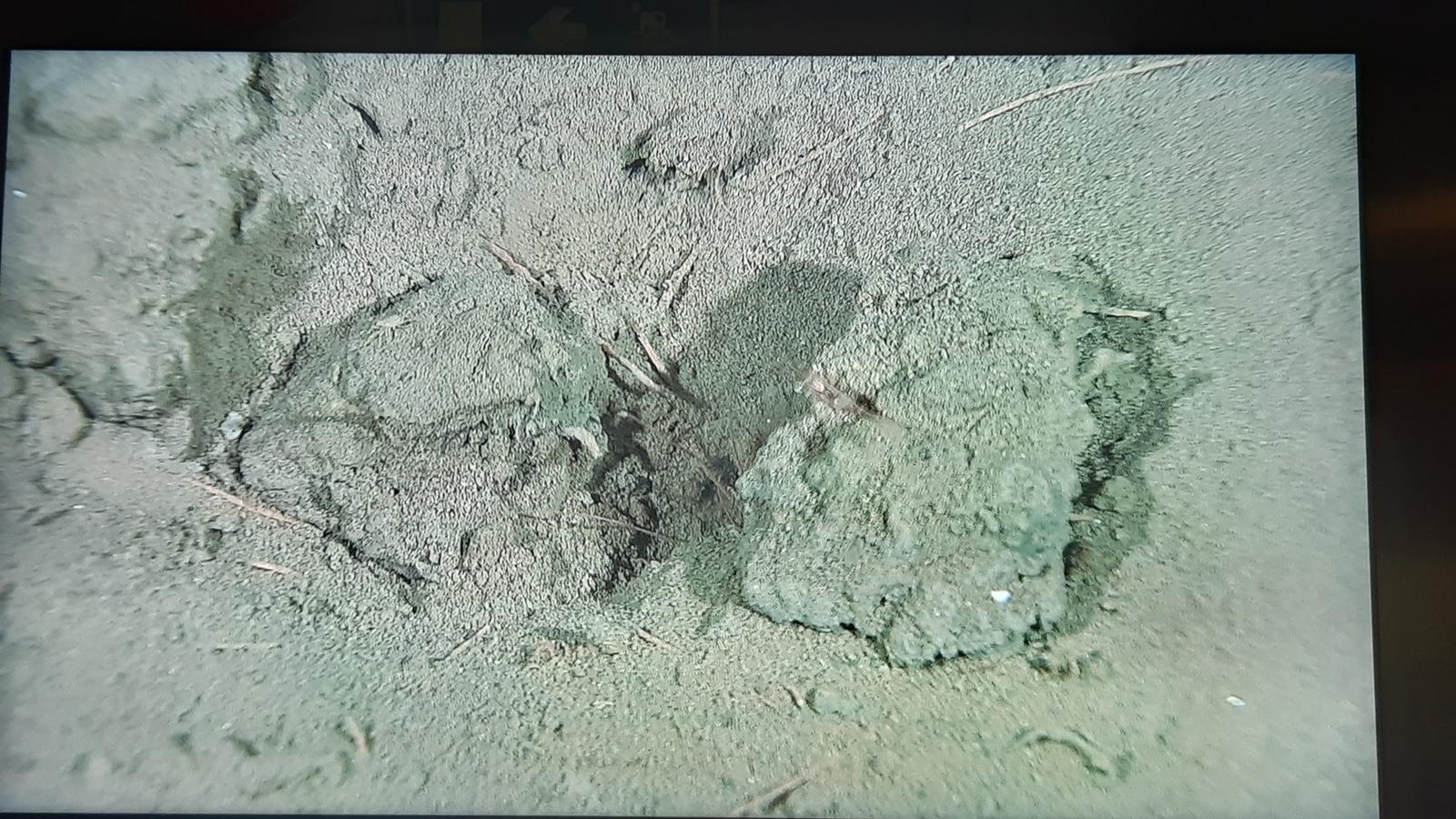 Neohela-huler (Neohela er en amphipod)